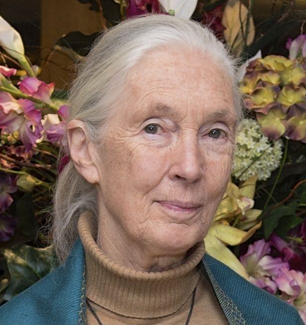 Die Zeit drängt – mein Interview mit Jane Goodall
